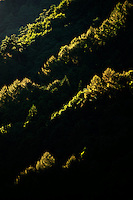 The green coniferous forest on the lower slopes of the Japan Alps, back-lit by late afternoon light, near Matsumoto, Nagano, Japan.