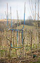 23/02/18<br /> <br /> Frames<br /> <br /> Full Grown furniture is grown in a woodland near Wirksworth, Derbyshire. <br /> <br /> As seen here: <br /> http://www.dailymail.co.uk/news/article-5587659/Willows-transformed-seats-seven-years-available-buy-5-000.html<br /> <br /> All Rights Reserved: F Stop Press Ltd. +44(0)1335 344240  www.fstoppress.com.
