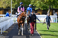 Winner of The Byerley Stud British EBF Novice Stakes (Plus 10) (Div 1) Autumn Twilight ridden by Kieran Shoemark and trained by David Menuisier is led into the Winners enclosure during Horse Racing at Salisbury Racecourse on 1st October 2020