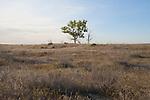 Hanford Reach National Monument, Wahluke Slope, shrub steppe habitat, grassland, Columbia Basin, eastern Washington, Washington State, Pacific Northwest, USA, North America,