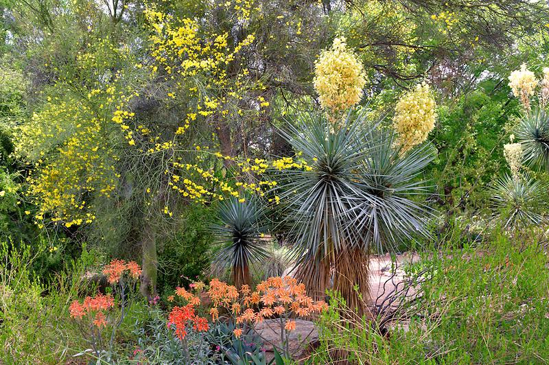 Flowers in Tucson Botanical Gardens. Tucson. Arizona