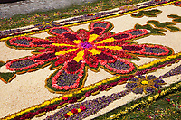 Antigua, Guatemala. Detail of an alfombra (carpet) of flowers and pine needles  decorates the street in advance of the passage of a procession during Holy Week, La Semana Santa.  The alfombra will be finished only a couple of hours before the passage of the procession, after which the remains will be quickly swept away by municipal street sweepers.