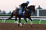October 22, 2015:  Nickname, trained by Steven Asmussen, and owned by LNJ Foxwoods, is entered in the Breeder's Cup 14 Hands Winery Juvenile Fillies. Candice Chavez/ESW/CSM