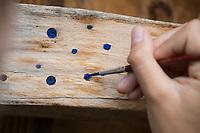 Niströhren-Verschlüsse, Verschlussdeckel, Nestverschluß, Nestverschluss, Nestverschlüsse werden mit Wasserfarbe markiert, Brutröhren. Markierung, um im kommenden Jahr sehen zu können, ob die Bienen erfolgreich geschlüpft sind. Wildbienen-Nisthilfe aus Holz, Längsholz, Hartholz, Wildbienen-Nisthilfen, Wildbienen-Nisthilfe selbermachen, selber machen, Wildbienenhotel, Insektenhotel, Wildbienen-Hotel, Insekten-Hotel