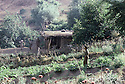 Irak 1985.Dans les zones libérées, région de Lolan, le jardin des peshmergas.Iraq 1985.In liberated areas, Lolan district, a vegetables' garden for peshmergas