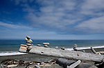 Famous Dungeness Spit near Sequim, Washington also hosts the Dungeness Recreation Area, Dungeness Lighthouse, and Dungeness National Wildlife Refuge.  Camping, fishing, hiking, equestrian activities, and wildlife viewing are excellent.  Rock Sculptures. Olympic Peninsula