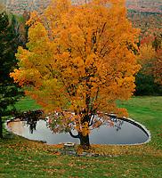 Pond with fall color near Groton, VT