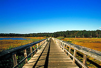 Walking bridge through water and marsh grass.