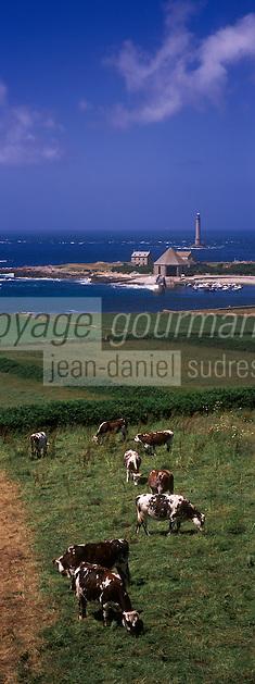 Europe/France/Normandie/Basse-Normandie/50/Manche/Presqu'île de la Hague/Goury: le phare du Cap de la Hague  et vaches normandes en paturage