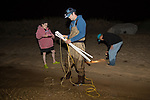 Karen Strauss, Mike Long & Jerry Hequembourg On Horseshoe Crab Survey