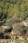 Israel, Jerusalem Mountains, Shai Zeltzer's cheese and goat farm on Mount Eitan