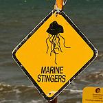 Panneau Attention aux méduses (certaines sont mortelles) sur la plage de Cairns Queensland