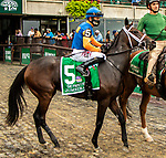 OCT 03, 2021: JUMEIRAH post parade in  Gr.1  Frizette Stakes, for 2 year old fillies, at Belmont Park, Elmont, NY.  Sue Kawczynski/Eclipse Sportswire/CSM