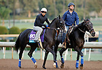 ARCADIA, CA - OCT 31: Big Score, owned by George Krikorian and trained by Tim Yakteen, exercises in preparation for the Breeders' Cup Juvenile Turf at Santa Anita Park on October 31, 2016 in Arcadia, California. (Photo by Zoe Metz/Eclipse Sportswire/Breeders Cup)