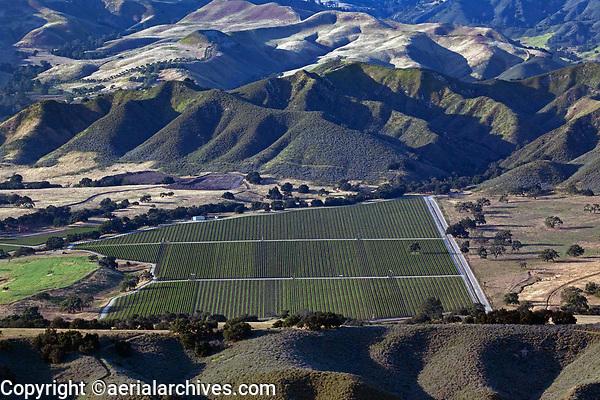 aerial photograph of farming in the Santa Ynez Valley mountains in spring, Santa Barbara County, California
