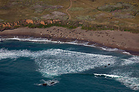 aerial photograph of elephant seals on a beach near Point Piedras Blancas, San Simeon, San Luis Obispo County, California