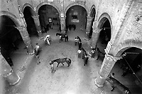 © Francesco Cito / Panos Pictures..Siena, Tuscany, Italy. The Palio. ..Each contrada (city district) has a horse assigned to it by lottery. Here the horses are numbered before being led into the square for the draw...Twice each summer, the Piazza del Campo in the medieval Tuscan town of Siena is transformed into a dirt racetrack for Il Palio, the most passionately contested horse race in the world. The race, which lasts just 90 seconds, has become intrinsic to the town's heritage since it was first run in 1597.