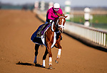 November 2, 2020: Point Of Honor, trained by trainer George Weaver, exercises in preparation for the Breeders' Cup Distaff at Keeneland Racetrack in Lexington, Kentucky on November 2, 2020. Alex Evers/Eclipse Sportswire/Breeders Cup