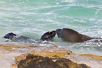 Mother and daughter monk seals enjoy a quiet beach in Hawai'i.