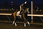 Speech, trained by trainer Michael W. McCarthy, exercises in preparation for the Breeders' Cup Filly & Mare Sprint at Keeneland Racetrack in Lexington, Kentucky on November 2, 2020.