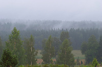 Mist rising out of the forest looking magic and mystical, almost like smoke. Smaland region. Sweden, Europe.