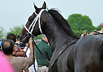 09 May 09: Charitable Man, ridden by Alan Garcia, leaves the winner's circle after winning the 56th running of the grade 2 Peter Pan Stakes for three year olds at Belmont Park in Elmont, New York.