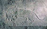 Assyria:  A wounded lion.  The Lion Hunt in Ninevah, Palace of Ashurbanipal.  Photo '85.