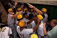 The Bradenton Marauders celebrate after pitchers Jose Maldonado, Cameron Junker, Brennan Malone, and Wandi Montout combined to throw a no-hitter during a game against the Dunedin Blue Jays on May 15, 2021 at BayCare Ballpark in Clearwater, Florida.  (Mike Janes/Four Seam Images)