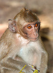 Baby Long Tailed Macaque