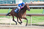 November 27, 2020: She Can't Sing, trained by Chris Block, wins Race 5, an allowance, at Churchill Downs in Louisville, Kentucky on November 27, 2020. Jessica Morgan/Eclipse Sportswire.