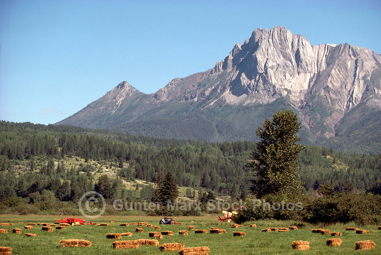 Straw Bales on a Farm below Hosmer Mountain near Fernie, in the Canadian Rockies, British Columbia, Canada, at Harvest Time