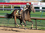 September 12, 2015:  Frivolous and jockey Jon Court win the 32nd running of the Locust Grove (Listed) $100,000 for fillies and mares at Churchill Downs for trainer Victoria Oliver and owner G. Watts Humphrey Jr..  Candice Chavez/ESW/CSM