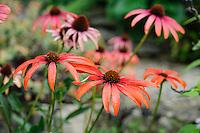 Special Plants, Derry Watkins - September