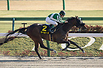 FUCHU,JAPAN-FEB 21: La Perouse,ridden by Christophe Lemaire,wins the Hyacinth Stakes (Road to Kentucky Derby race)at Tokyo Racecourse on February 21,2021 in Fuchu,Tokyo,Japan. Kaz Ishida/Eclipse Sportswire/CSM