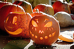 Pumpkin harvest in the Historic Deerfield Museum, Deerfield, Pioneer Valley, MA, USA