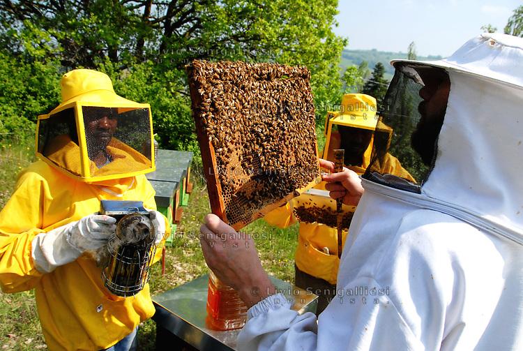 Barbiano (appennino parmense) Italia - Membri della cooperativa agricola 'Lo sciame' sostenuta da CIAC Parma. Il titolare e tre rifugiati producono miele sulle colline del parmense.<br /> Foto Livio Senigalliesi