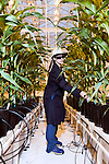September 9, 2014. Research Triangle Park, North Carolina.<br />  Samantha Collins, a greenhouse scientist trims back the plants in a grow room. Exposure to the lights in the greenhouse for employees is closely monitored and everyone is required to wear a sun hat, sunglasses and long sleeves.<br /> The Syngenta Advanced Crop Lab is nearly one acre of advanced agricultural research under glass. The lab is capable of maintaining many different environments under its roof, allowing scientists to test the effects of various environmental elements on different crops and plants side by side.