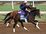 ARCADIA, CA - NOV 01: Good Samaritan, owned by China Horse Club & WinStar Farm, LLC and trained by William I. Mott, exercises in preparation for the Breeders' Cup Sentient Jet Juvenile at Santa Anita Park on November 1, 2016 in Arcadia, California. (Photo by Scott Serio/Eclipse Sportswire/Breeders Cup)