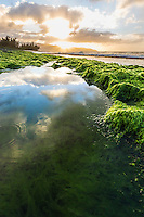 Sunset reflections in a kelp-lined pond along the shore at Pua'ena Point, North Shore, O'ahu.