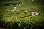 The peloton winds its way through the vineyards during Stage 3 of the 2019 Tour de France running 215km from Binche, Belgium to Epernay, France. 8th July 2019.<br /> Picture: ASO/Pauline Ballet | Cyclefile<br /> All photos usage must carry mandatory copyright credit (© Cyclefile | ASO/Pauline Ballet)