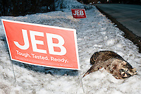 Jeb Bush - Campaign Signs and Dead Raccoon - near Amherst, NH - 7 Feb. 2016