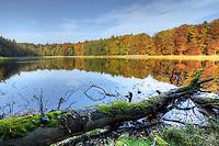 Germany - Brandenburg: Grumsin Forest