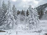 Snow creates a pretty scene in Yellowstone.