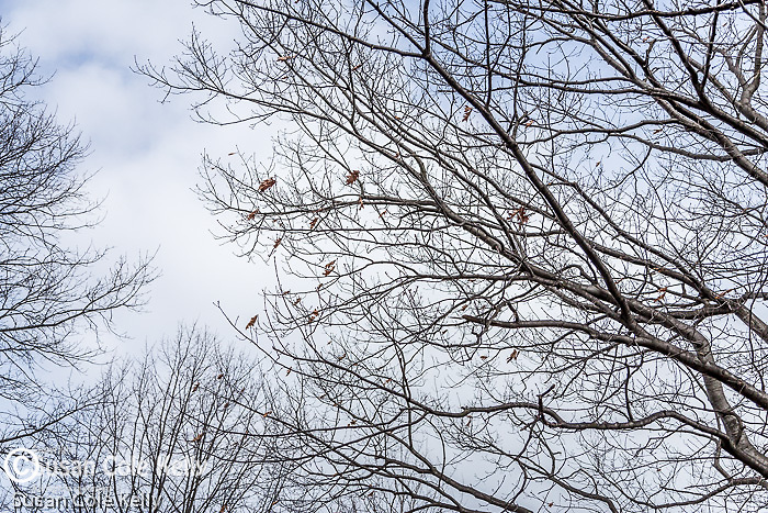 Spring branches along the Fenway, Boston, Massachusetts, USA