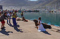 South Africa, Cape Town,Hout Bay harbour,tourists shooting
