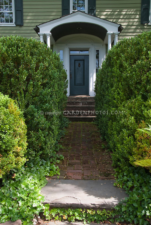 Boxwood and Ivy in shade leading to front door of house home landscape entry