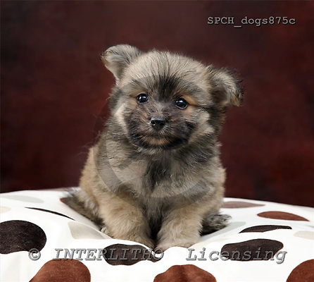 Xavier, ANIMALS, dogs, photos+++++,SPCHDOGS875C,#a# Hunde, perros