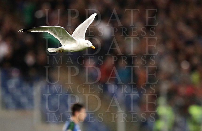 ption:<br /> Calcio, Serie A: Roma, stadio Olimpico, 19 marzo, 2017<br /> A seagull flies during the Italian Serie A football match between Roma and Sassuolo at Rome's Olympic stadium, March 19, 2017<br /> UPDATE IMAGES PRESS/Isabella Bonotto