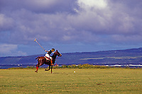 Playing polo on the north shore, Island of Oahu