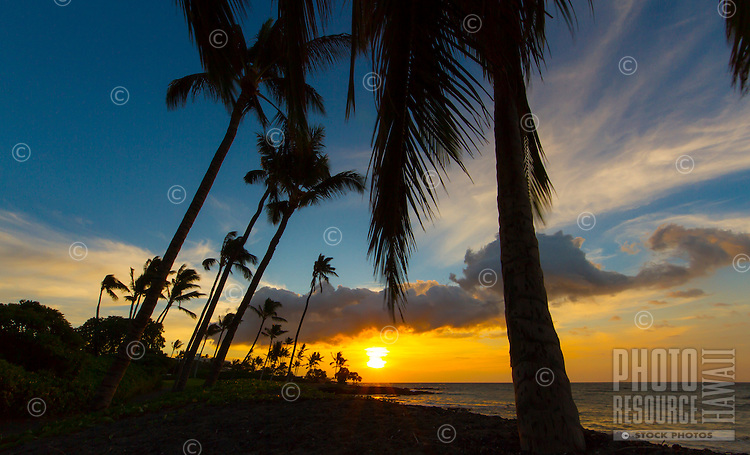 Coconut palm trees and naupaka at sunset, on a black sand beach between Mauna Lani and Fairmont Orchid Resorts, Big Island.